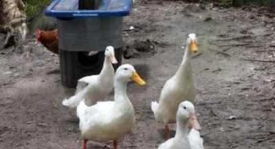 How to make a goose feeder