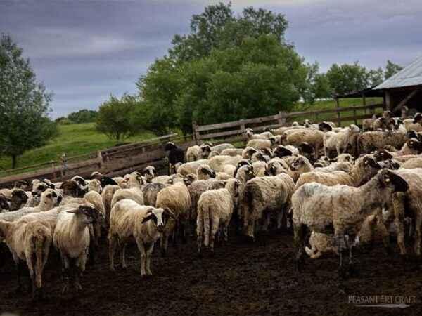 How to make a sheepfold