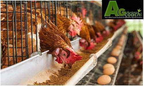 How to make feed for broilers yourself