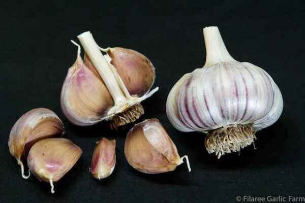 How to plant garlic in Siberia
