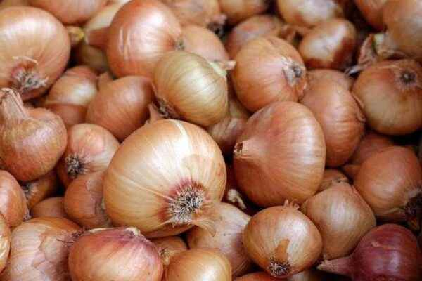How to prepare onions for planting