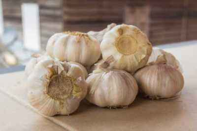 How to properly feed garlic with yeast