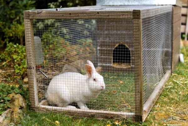 How to properly slaughter and butcher rabbits at home