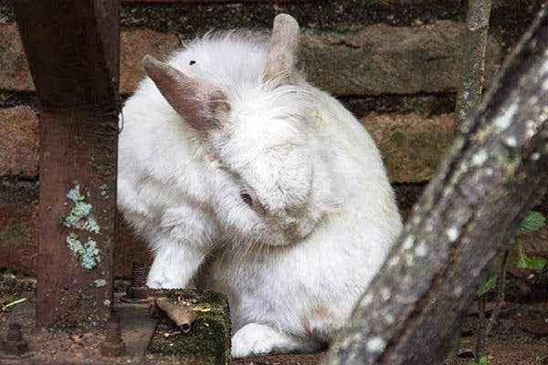 How to treat worms in rabbits