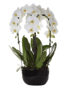 How to use agricola for orchids