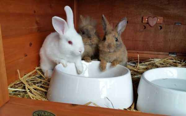How to wash a rabbit