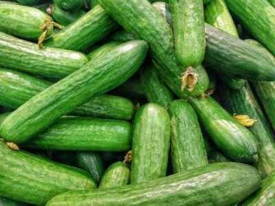 How to water bushes of cucumbers