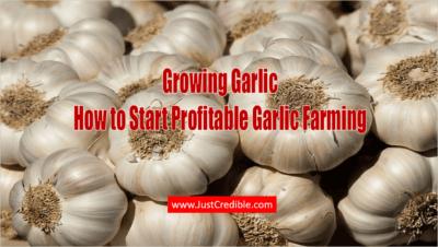 Is garlic business profitable?