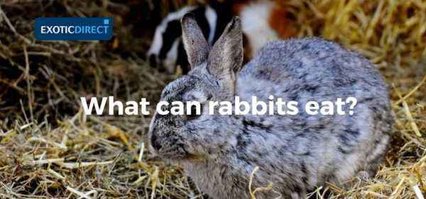 Is it possible to include burdocks in the diet of rabbits