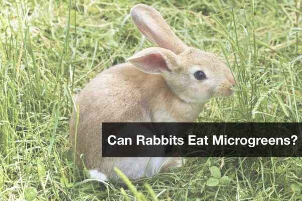 Is it possible to introduce bread into the diet of rabbits