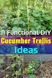 Making trellises for cucumbers with your own hands
