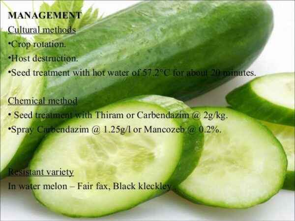 Method of spraying cucumbers with green