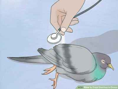 Methods for treating diarrhea in pigeons