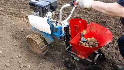 Motoblock when planting potatoes