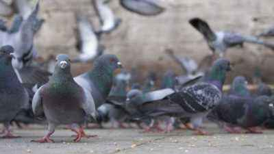 National signs about pigeons