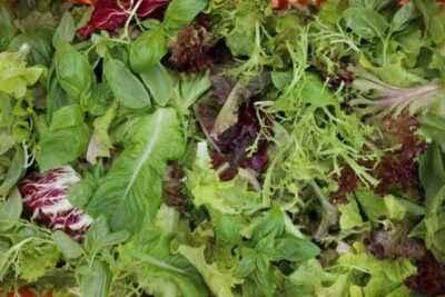 Planting lettuce pepper seedlings in 2018 according to the lunar calendar