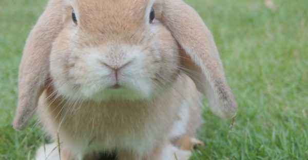 Popular rabbit breeds