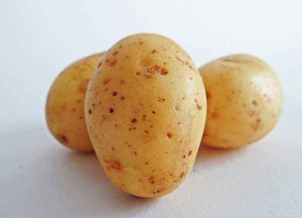 Popular varieties of potatoes for the Moscow region