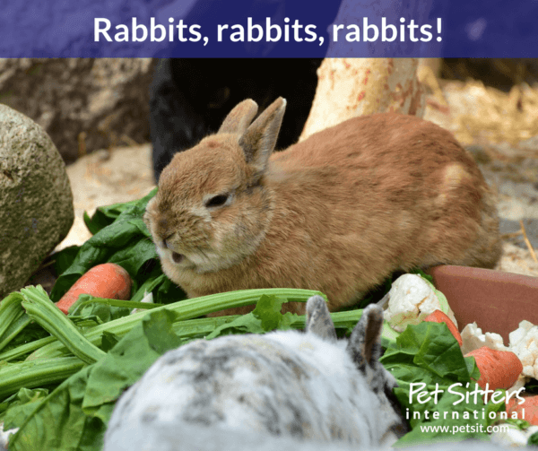 Positive qualities and rules for using rabbit manure