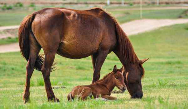 Pregnancy in horses