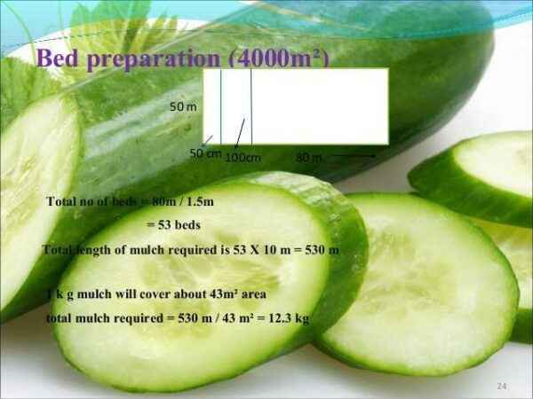 Preparation of beds for cucumbers