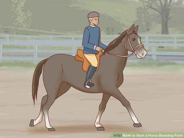 Proper horse breeding as a business