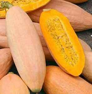 Pumpkin Variety Pink Banana