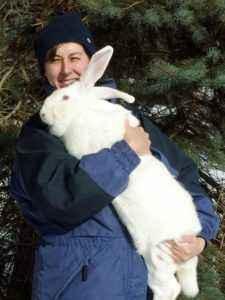 Rabbit breed White Giant