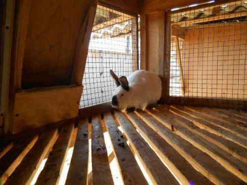 Rabbit cell disinfection methods