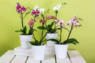 Rules for choosing an orchid