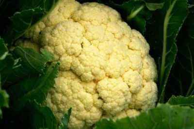 Rules for growing cauliflower