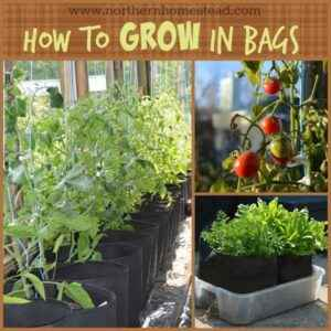 Rules for growing cucumbers in bags