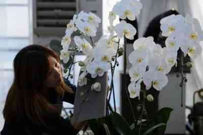 Rules for growing orchids from Asia