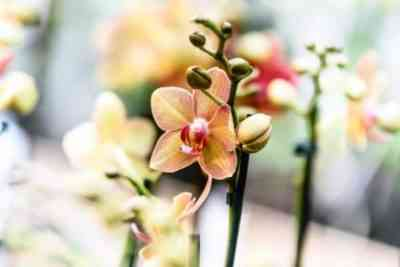 Rules for planting orchids in a closed system