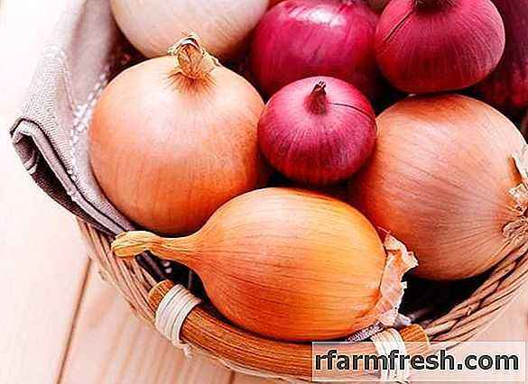 Rules for processing onions with ammonia