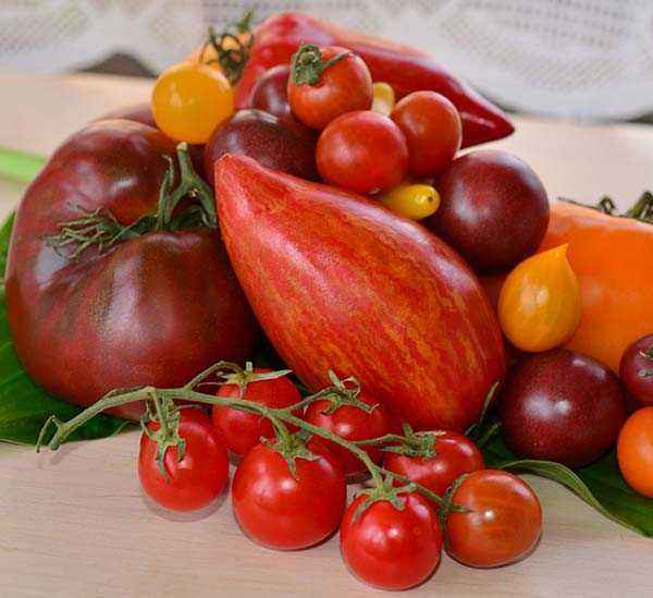 Rules for sowing tomatoes in open ground seeds