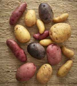 Rules for storing potatoes in the cellar in winter