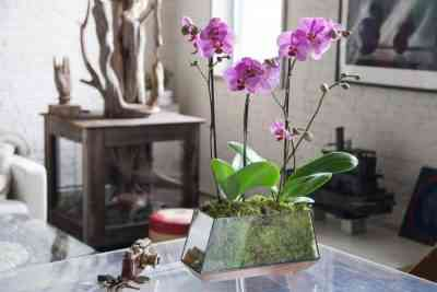 Rules for transplanting orchids at home