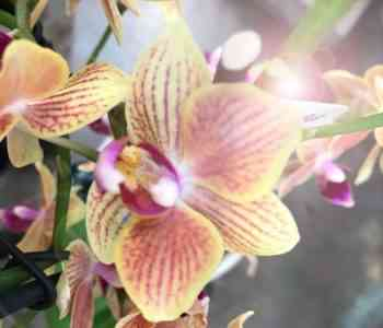 Sun or shadow suitable for orchid
