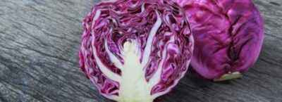 The benefits and harms of blue cabbage
