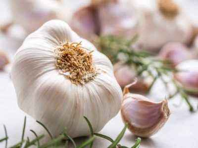 The benefits and harms of Chinese garlic