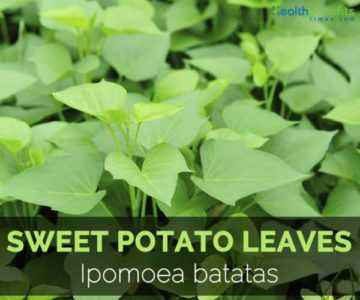 The benefits and harms of potato tops