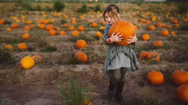 The benefits of pumpkin for the female body