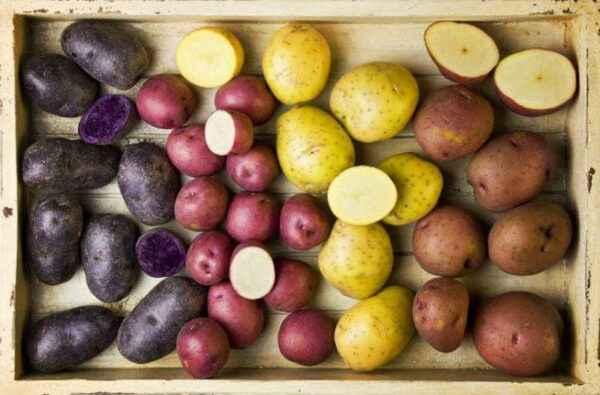 The best seeds of elite potato varieties