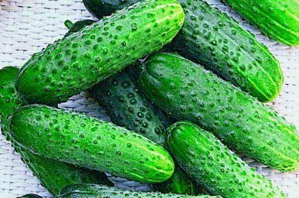 The best self-pollinated varieties of cucumbers