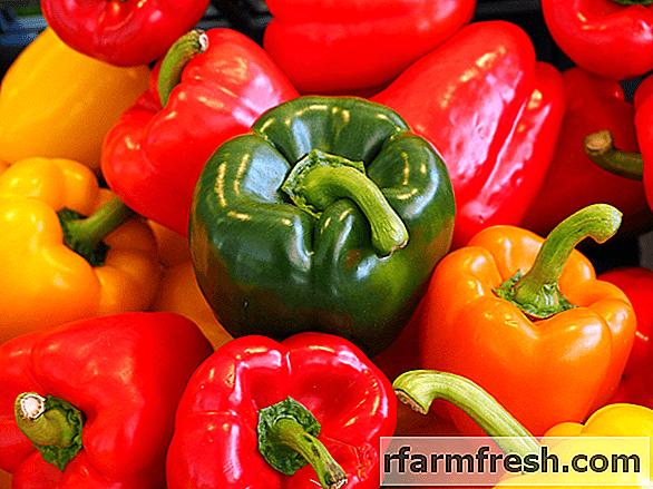 The best varieties of salad pepper for the Urals