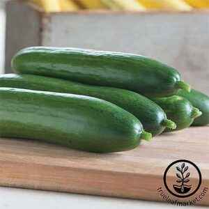 The list of the best varieties of cucumbers for different areas