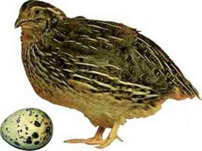 The reasons for the decrease in the level of egg production in quail
