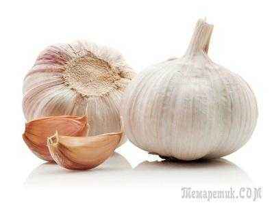 The rules for planting garlic in the autumn in the Leningrad region
