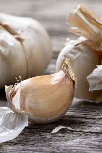 The secrets of garlic yield